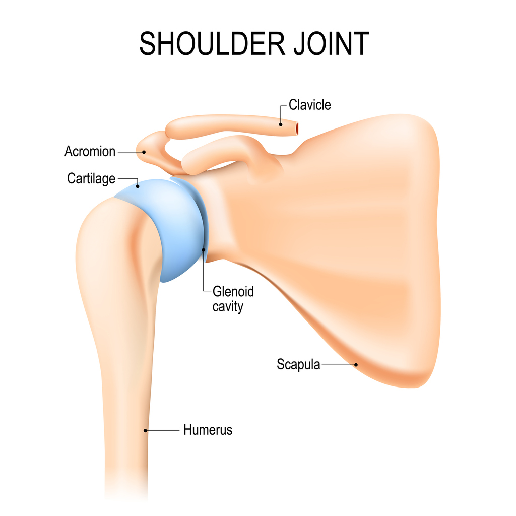 Shoulder Westphal Orthopedics